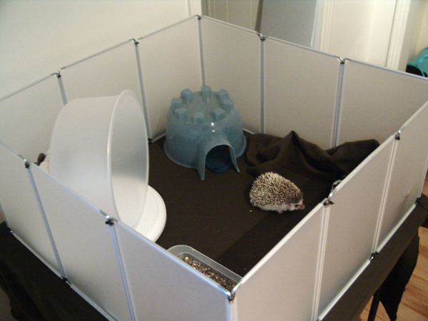 Cage dillema: cage and placement - Hedgehog Central ...